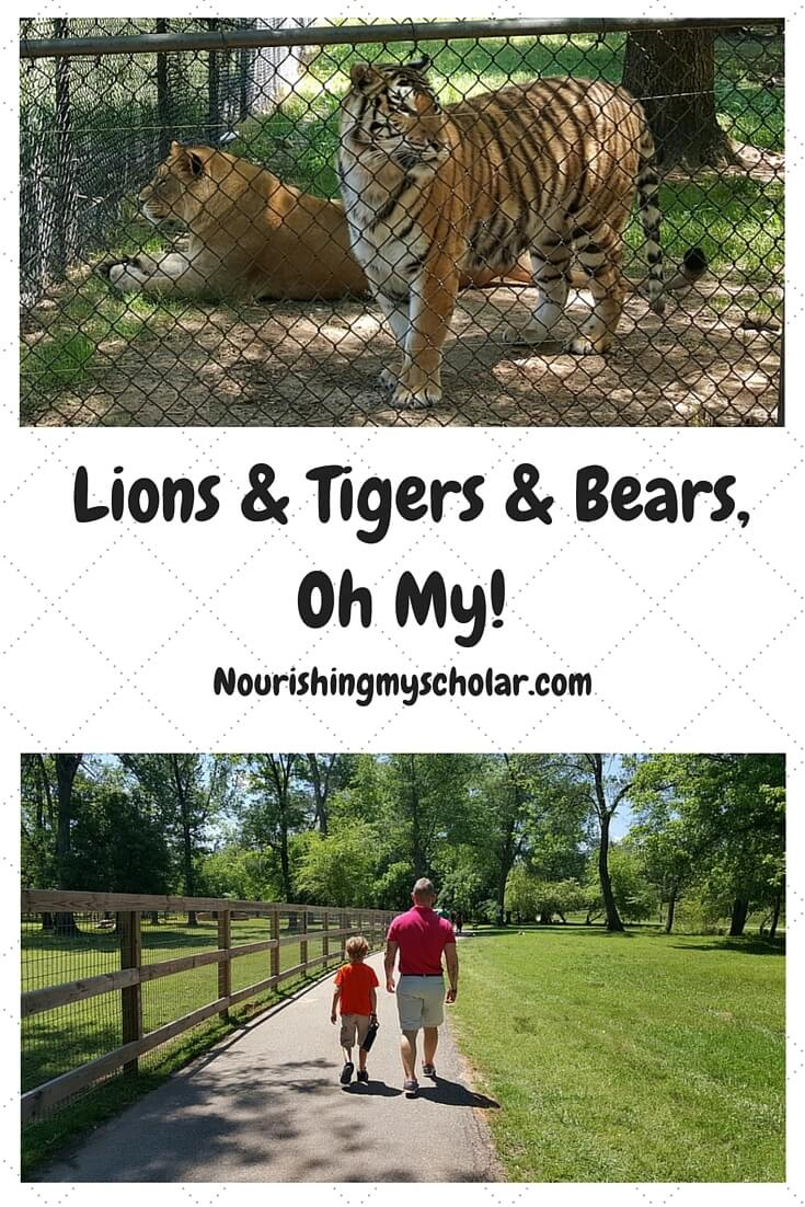 Lions & Tigers & Bears, Oh My!