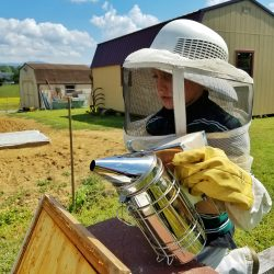 Our Beekeeping Adventure