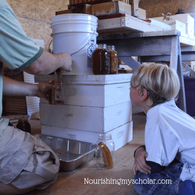 Harvesting Honey with Kids