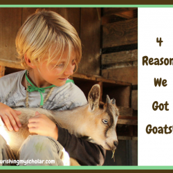 4 Reasons We Got Goats
