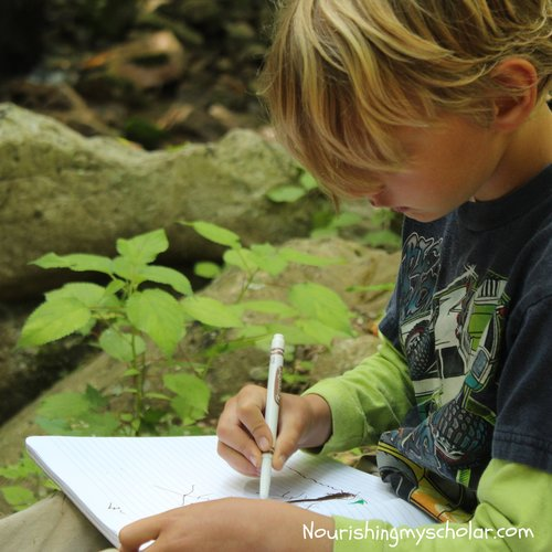 8 Tips for Nature Study
