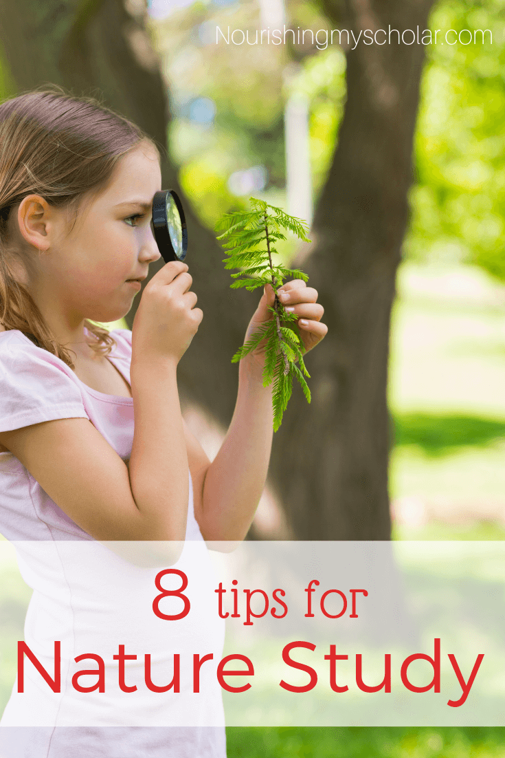 8 Tips for Nature Study: A nature study doesn't have to be difficult or intimidating. Here are 8 tips to help you make your homeschool nature study a fun and educational adventure! #nature #naturestudy #naturestudyforkids #naturewalk #naturejournaling #exploringnature #homeschooling #natureactivities #naturejournal #naturebooks