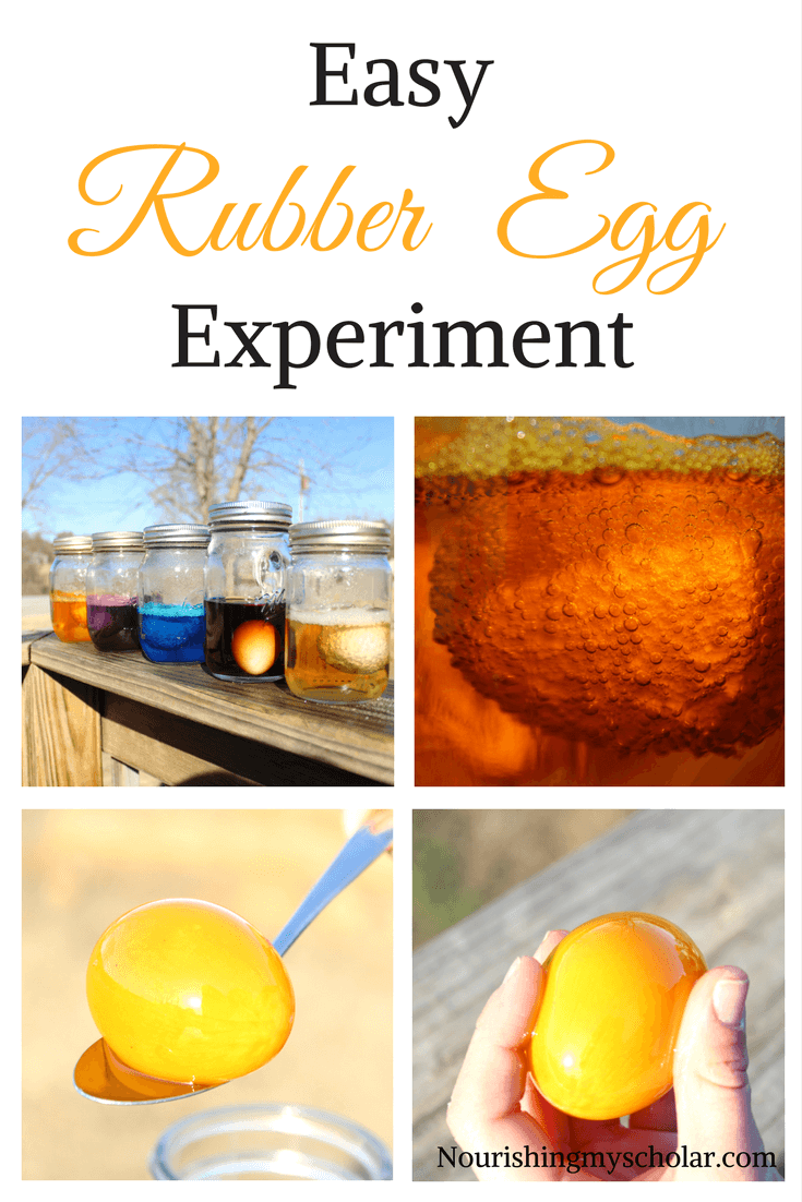 Easy Rubber Egg Experiment! Yes, easy! It only takes about 5 minutes to set up and then a week's worth of observations. Come see how easy it really is! #rubberegg #rubbereggexperiment #science #stem #homeschool #homeschoolscience
