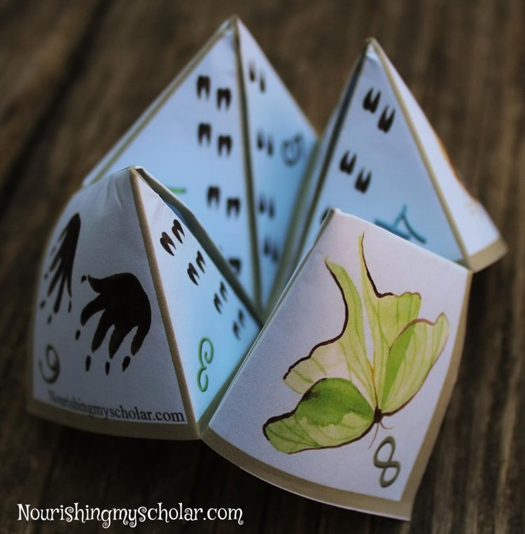 Nature Game Cootie Catcher