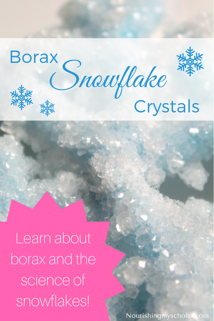 Borax Crystal Snowflakes: Borax crystal snowflakes are a fun STEAM activity for children of all ages. #homeschooling #science #winter #winterscience #winteractivity