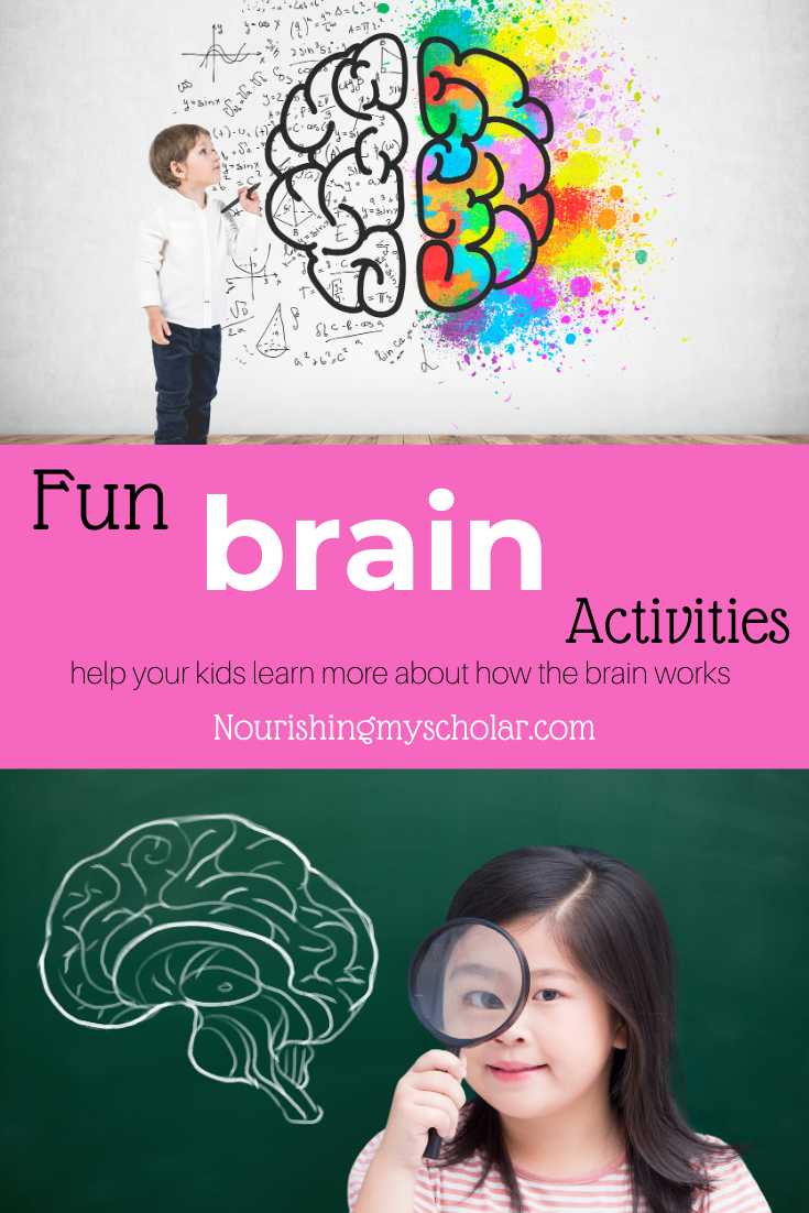 Fun Brain Activities for Kids: Help your kids learn more about how the brain works with these fun brain activities that are engaging and hands-on! #homeschool #education #science #kidlit #handsonscience #handson #childrensbooks #brainactivities