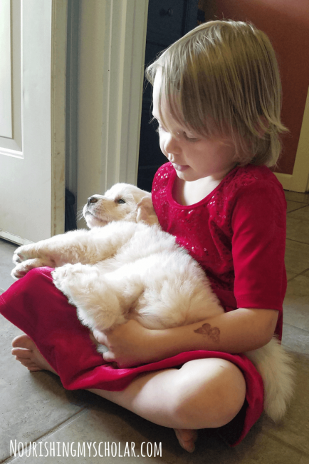 Homeschooling Kids and a Dog: Bringing Home a Great Pyrenees