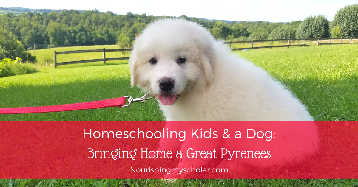 Homeschooling Kids And A Dog Bringing Home A Great Pyrenees Nourishing My Scholar