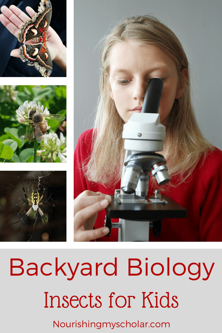 Backyard Biology Insects for Kids