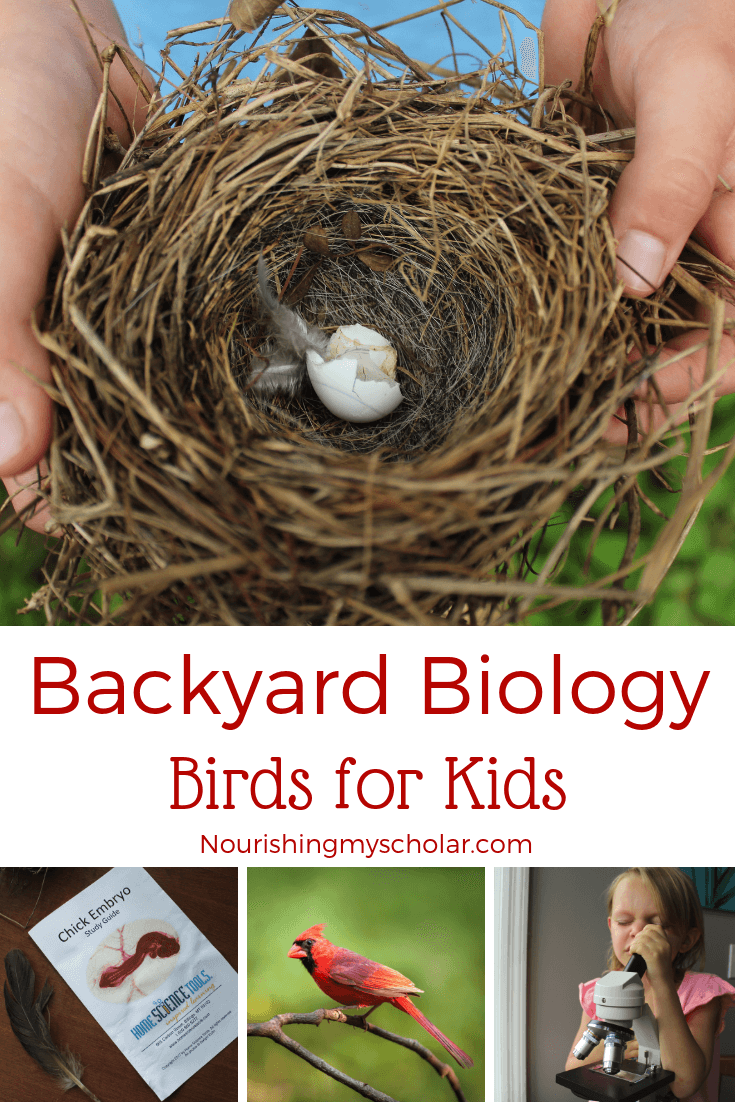 Backyard Biology: Birds for Kids - Kids will love studying the biology of birds from their own backyards! #naturestudy #birds #backyardbirds #birdbooksforkids #birdunitstudy #birdactivities