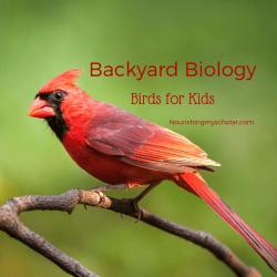 Backyard Biology: Birds for Kids