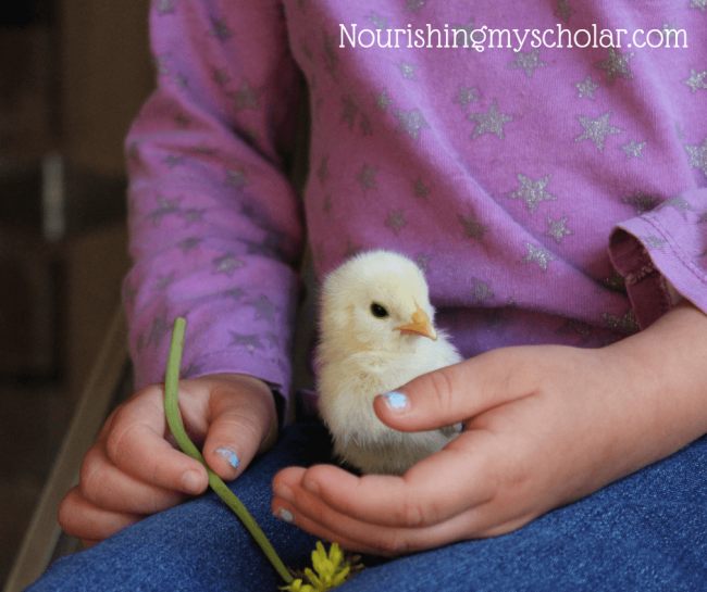 Backyard Biology: Birds for Kids