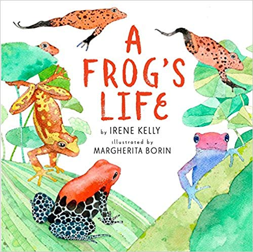 10 of the Best Frog Life Cycle Books for Kids