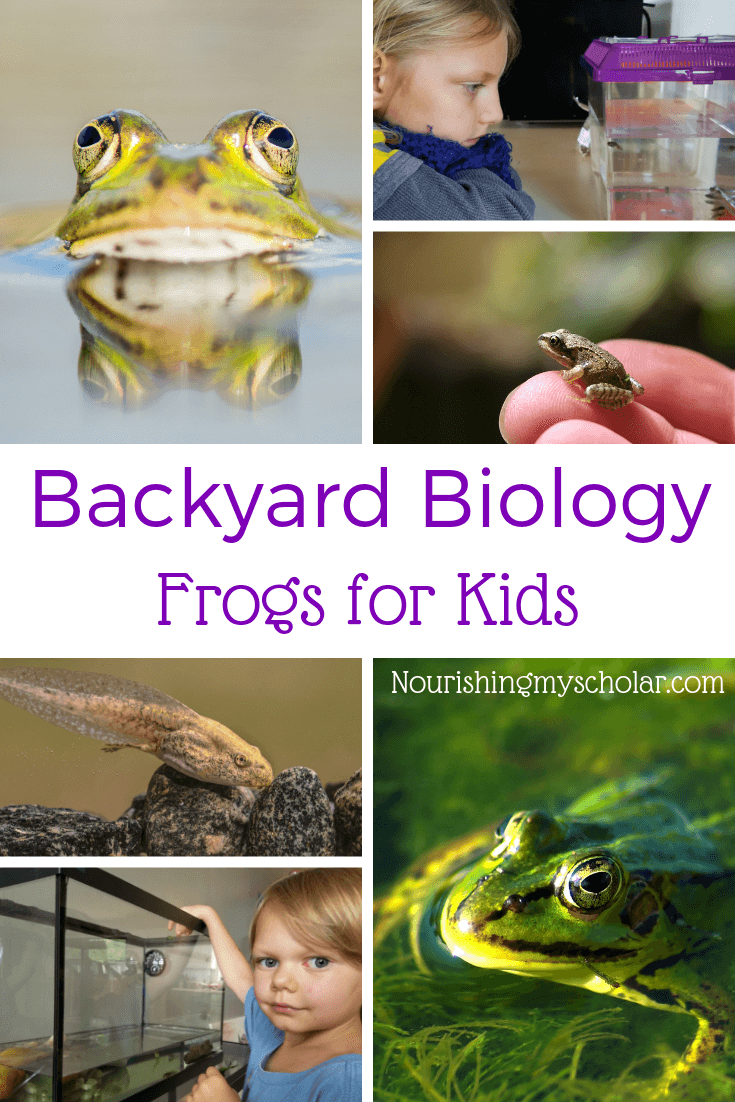 Backyard Biology: Frogs for Kids: Have you ever considered having your kiddos raise their own tadpoles? Maybe your child wants to learn more about metamorphosis? If the answer is yes, then I've got some amazing frog resources to help you create an awesome frog life cycle unit study for kids! #frogsunitstudy #froglifecycle #handsonscience #allaboutfrogs #lifecycleofafrog #frogsforkids #raisingtadpoles #naturestudy