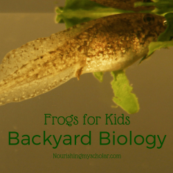 Backyard Biology: Frogs for Kids