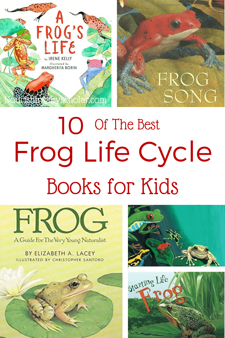 What is the Life Cycle of a Frog?